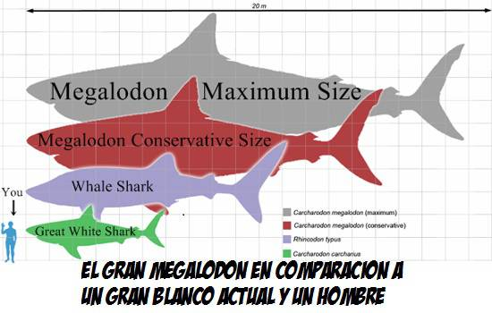 escala-del-megalodon-y-tamano