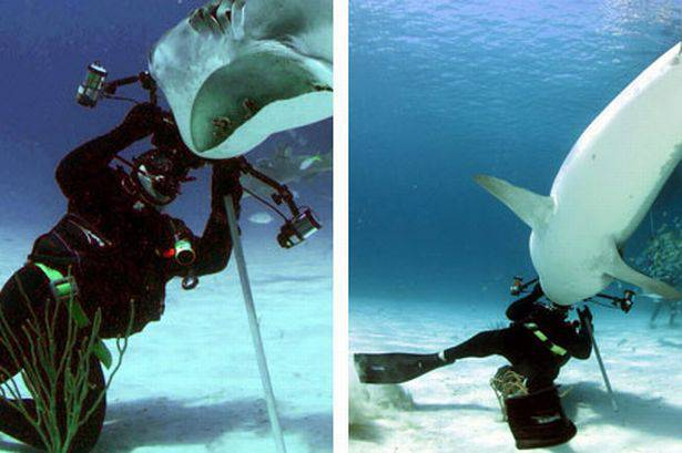 the-moment-russell-easton-was-attacked-by-a-tiger-shark-in-the-bahamas-912918241