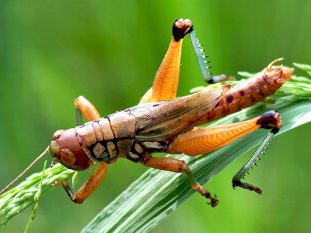 biodiversity-221886-1