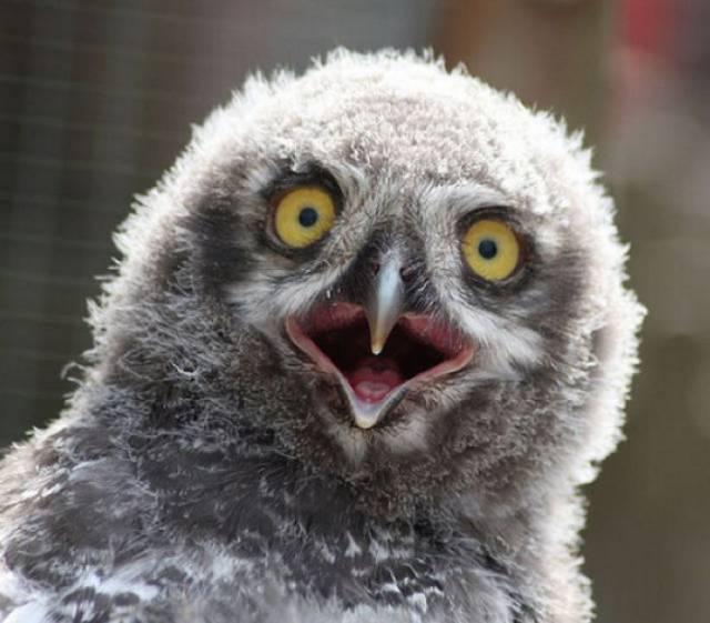 surprised-shocked-animals-funny-22__700