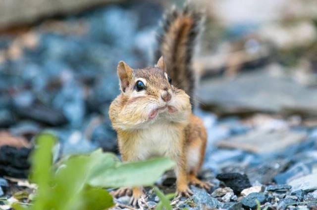 surprised-shocked-animals-funny-23__700