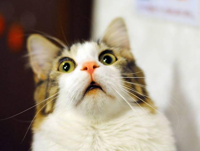 surprised-shocked-animals-funny-25__700