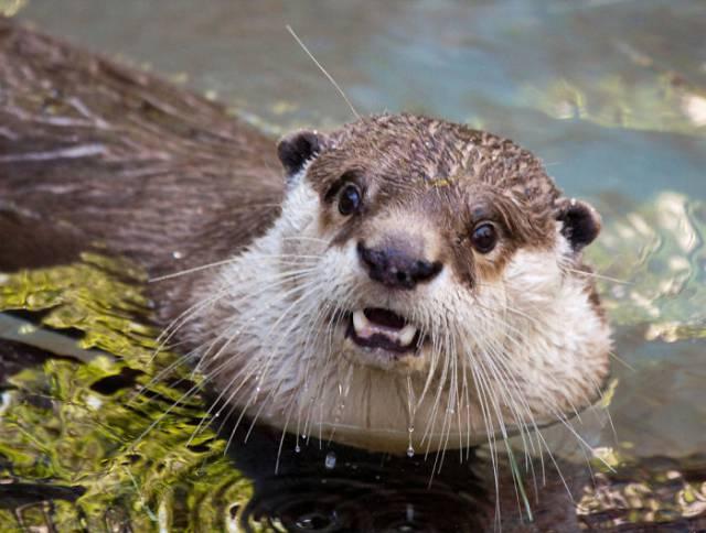 surprised-shocked-animals-funny-31__700