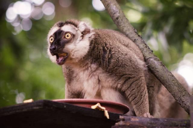 surprised-shocked-animals-funny-40__700