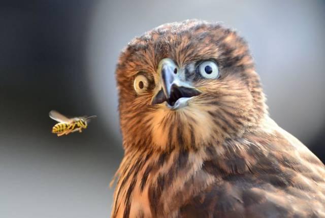 surprised-shocked-animals-funny-7__700