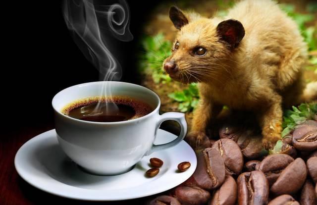 mostexpensivecoffee-kopi-luwak