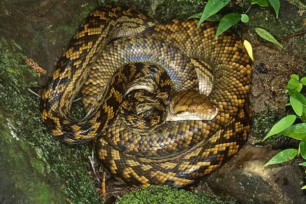 snake_6