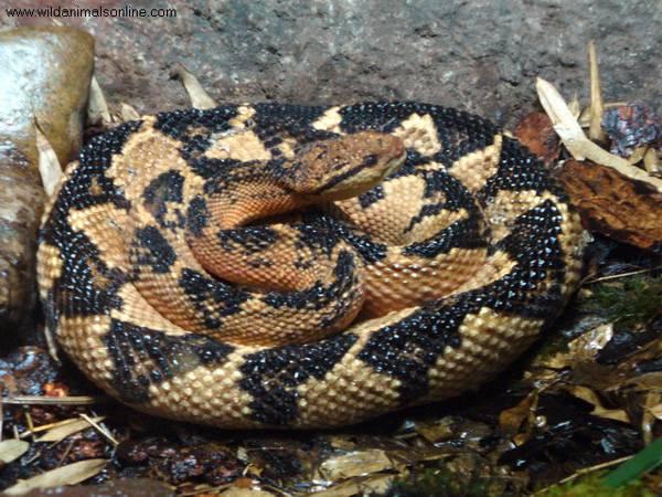 snake_8