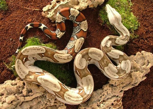 snake_9