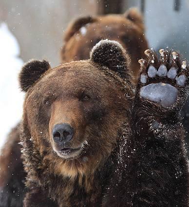 bearfarm